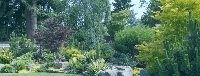 Creating a Garden Oasis in North Carolina