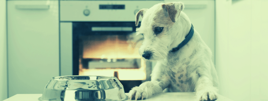 Let's Cook for Our Pet Day