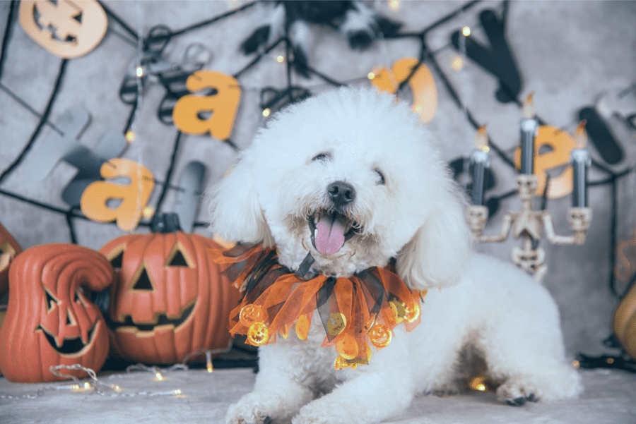Make Your Dog's Day with these Tricked Out Treats & Costumes
